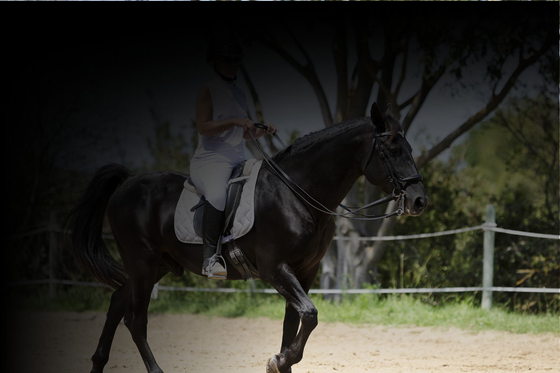 dressage-caval-connect